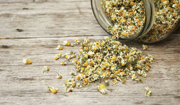 Chamomile - Yogurt - Home Remedies for Bacterial Vaginosis – 10 Useful Treatments